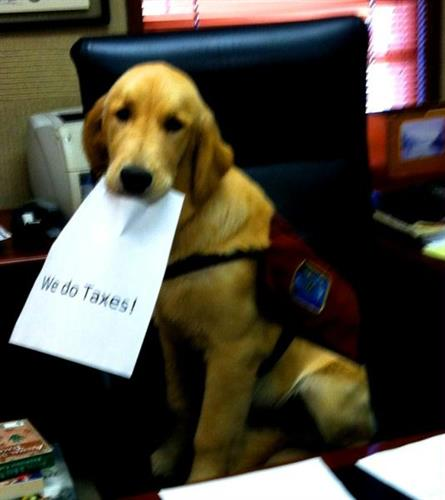 Ice is a service dog in training that assists us at the office.