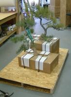 specialty shipping - bonsai trees on pallet, freight