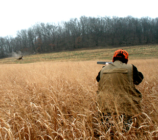 Hunting Dog Training Southern Wisconsin