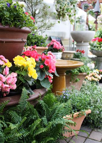 Come see our great selection of annuals and planters