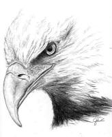 Gallery Image eagle%20head%201%20BW.jpg