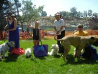 All 4 category winners at River Festival Dog Show