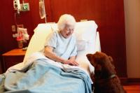Pet therapy dog visits a patient