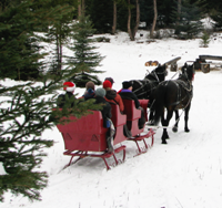 our sleigh coming into the camp