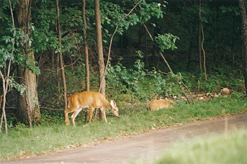 Campus life is full of nature on its 1,440 acres