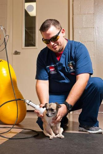 All Pets Animal Hospital and 24 Hour Emergency Care