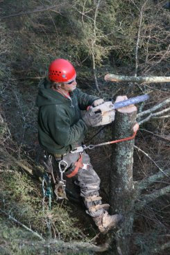 Gallery Image hunters%20tree%20service-tree%20removal.jpg