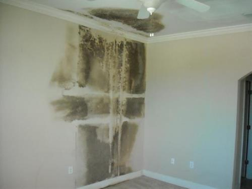 Mold growth in a home from water damage