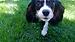 DanK Pet Sitting & More, Inc.