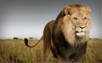 Serengeti Software