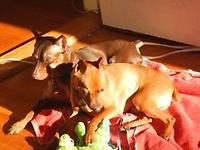 Studley & Rosie