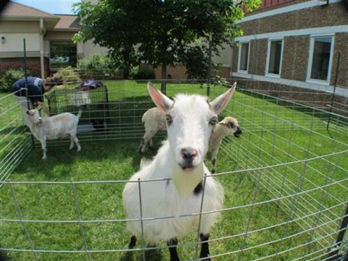 Our residents loved Farm Day
