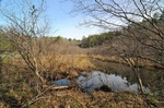 Wetland Loop Trail at Smithgall Woods State Park