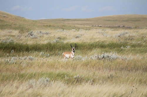 Antelope Scenery