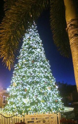 City of Punta Gorda Tree Lit