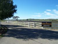 Los Alamos Vineyards in the spring