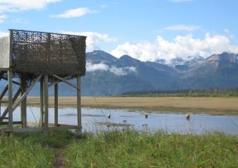 Raised viewing platform at BearCamp