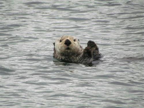 Gallery Image otter.jpg