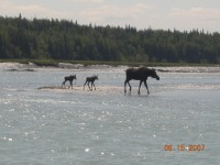 Mom and twins crossing the river