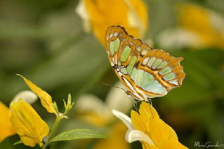Gallery Image green_butterfly.jpg