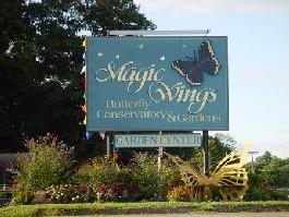 Gallery Image magic_wings_1.jpg