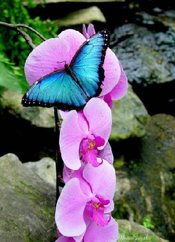 Gallery Image pink_flowers.jpg