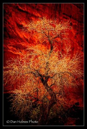 Nature - Red Canyon Cottonwood