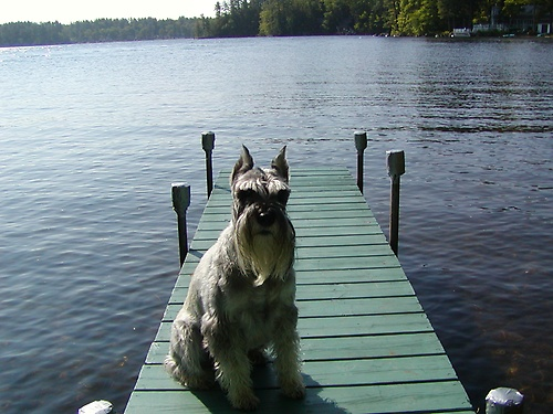 Harry on the private dock.