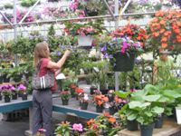 Selecting plants in the greenhouse