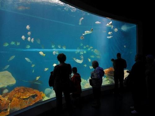 Gulf of Mexico Aquarium
