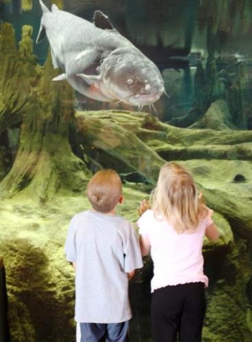 Main Channel Fresh Water Aquarium