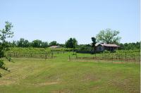 Amber Falls Vineyard