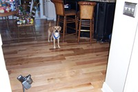 Natural Hickory Solid Wood Floor