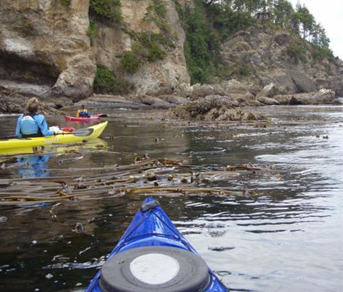 Kayaking Freshwater Bay