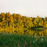 Pine Cone - a fall getaway weekend!