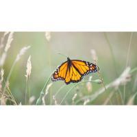 2019 Butterfly Release