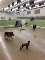Pampered Pets Boarding and Daycare - Baxter