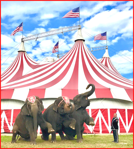 We love our elephants... the biggest stars of the show.