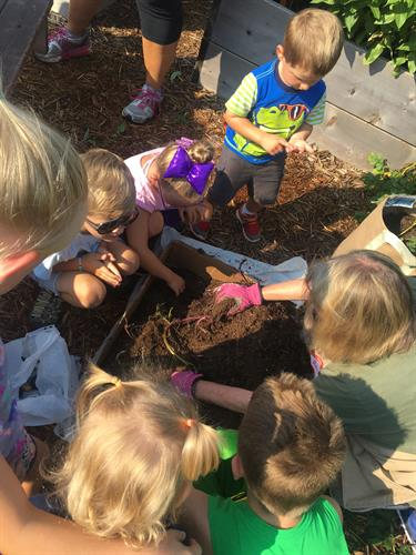 Let the kids explore in the Bee Happy Discovery Garden.