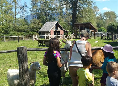 Working heritage farm with pigs, sheep, goats, chickens, ducks and Jersey cow!