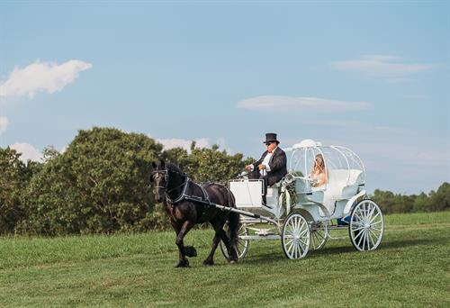 Our brides can truly feel like a princess when they arrive in our carriage pulled by Romeo