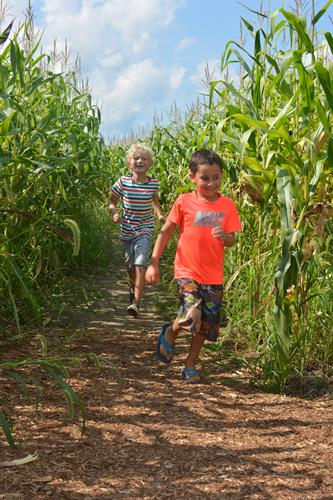 Running through the Heroic Corn Maze!
