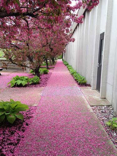 Gallery Image spring_sidewalk.jpg