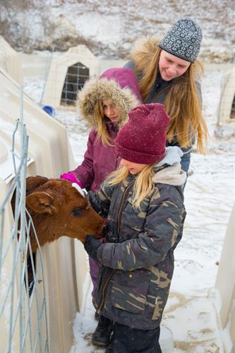 farm friends feeding calves in winter