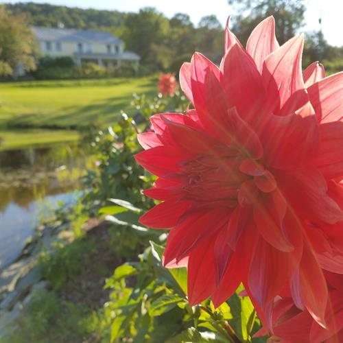 Enjoy flowers in the many gardens on the property.