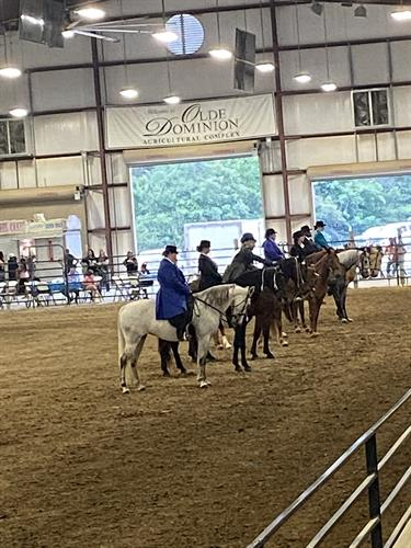 Horse Show in Arena