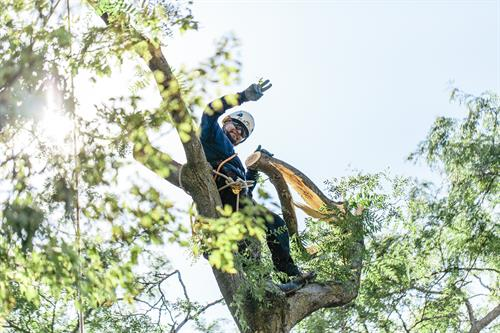 Nels Johnson Tree Experts: Evanston's premiere tree care company for over 88 years.