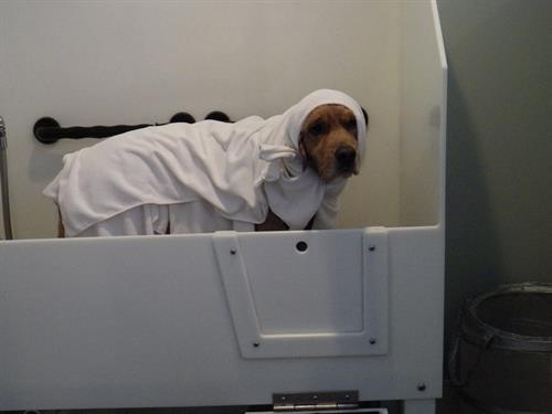 Spotless dog wash pet grooming dog wash evanston chamber of spa day at spotless solutioingenieria Image collections