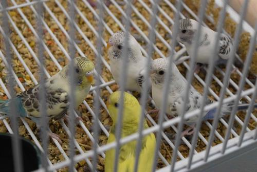 Gallery Image Birds_LR_0578.jpg