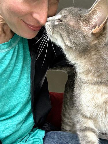 Cat affectionately kissing pet sitter.